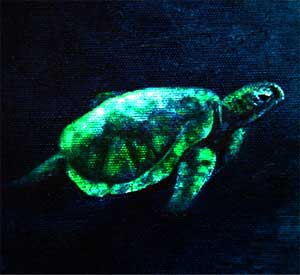 Picture of Turtle